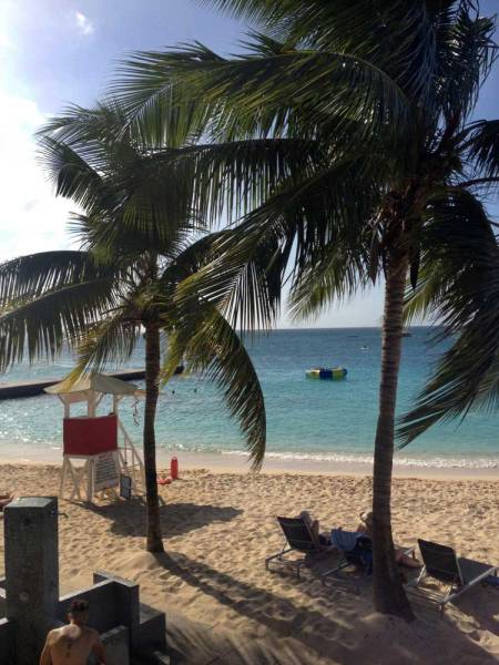 Montego-Beach-palms