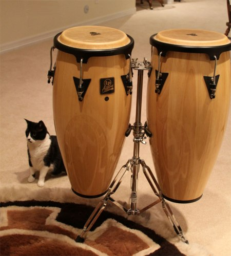 Congas with Mimi the cat